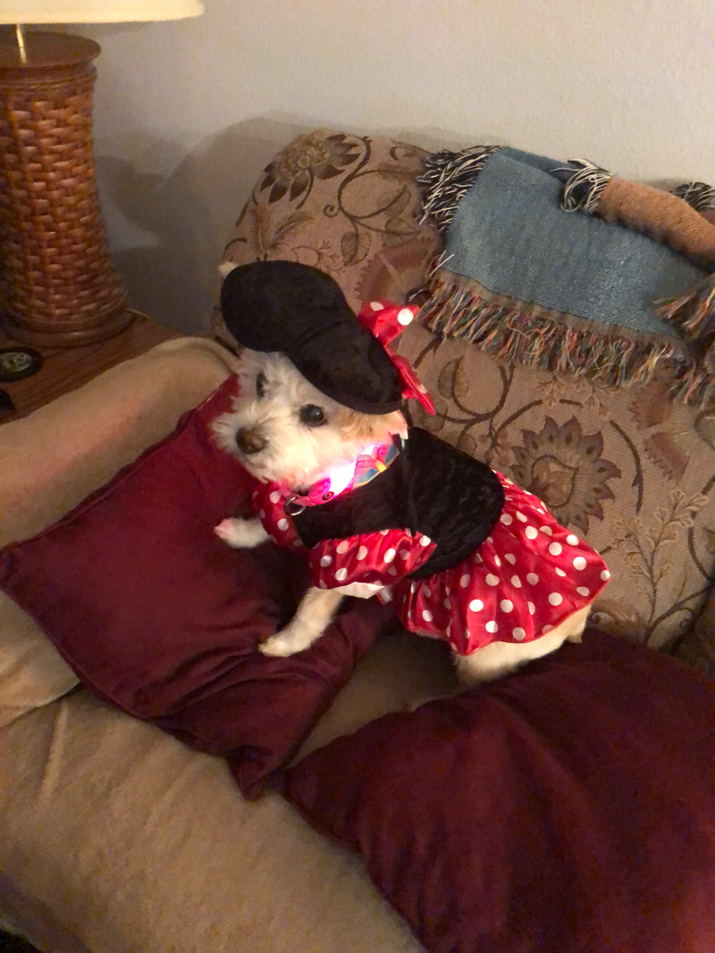 Ginger is dressed up as Minnie Mouse