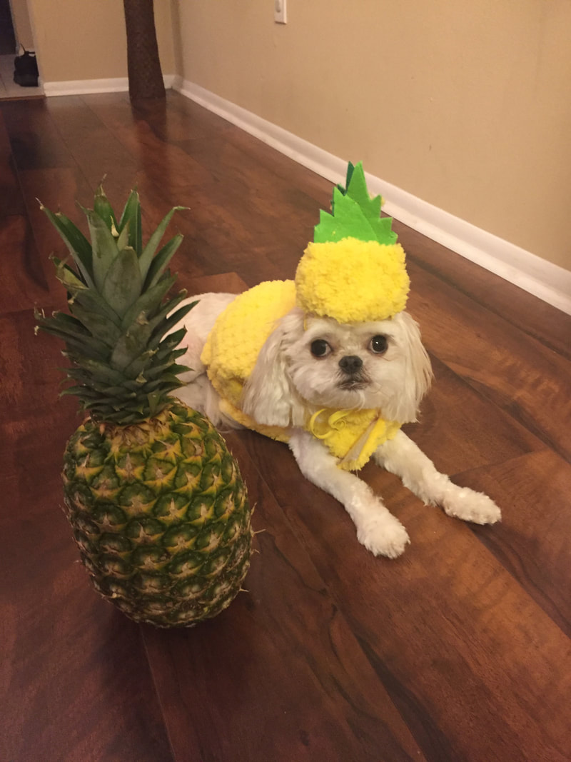 Maddox dressed up as a pineapple