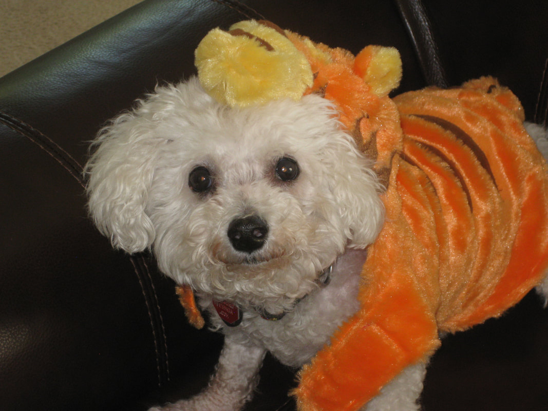Snowball is dressed up like Tigger