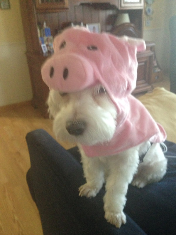 Taz is dressed up like a cute little piggy.
