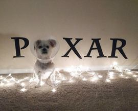 Olive dressed up as the Pixar lamp